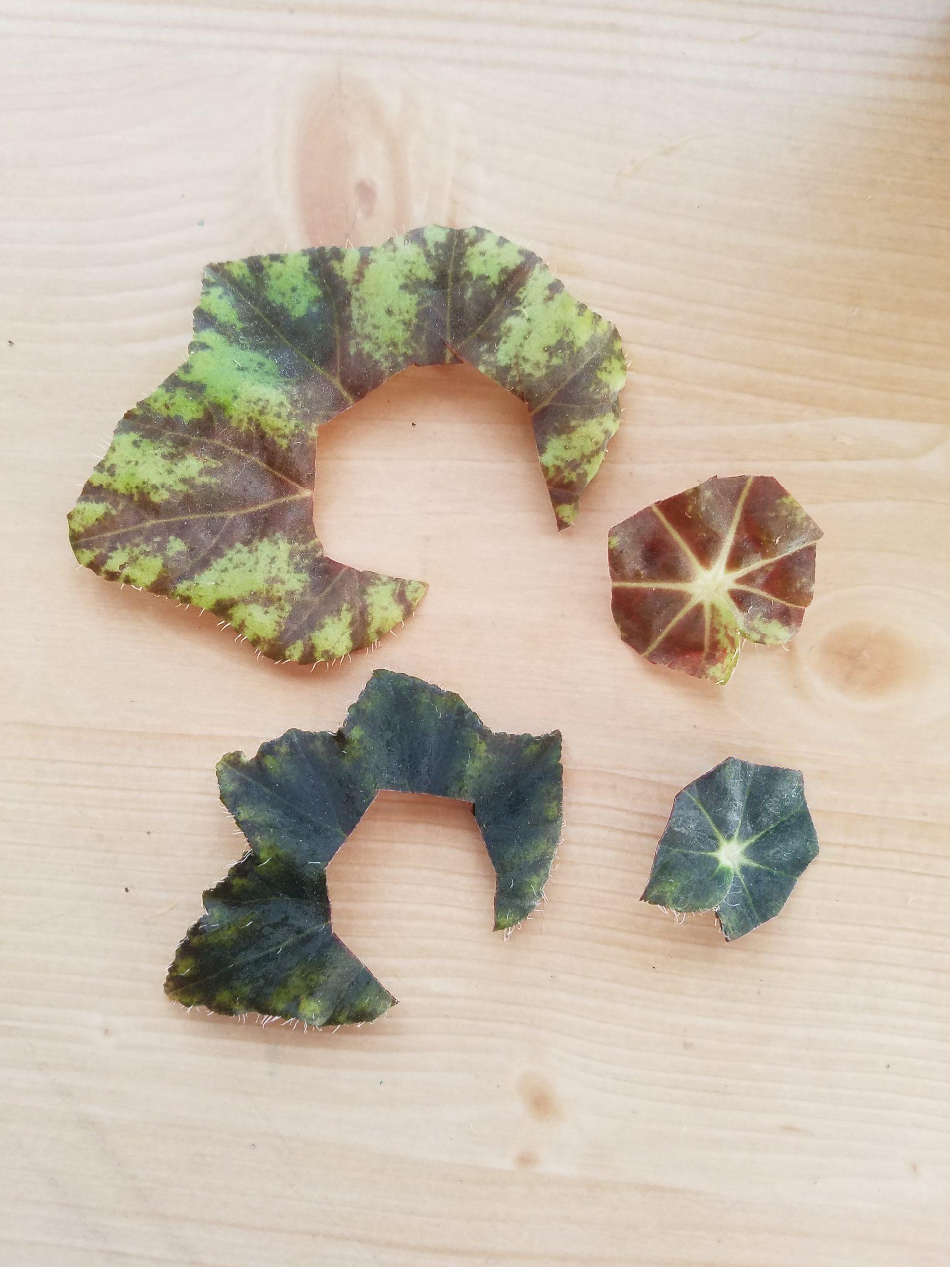 葉っぱをカット