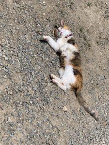 シャンプー後猫