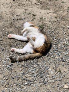 猫ゴロンゴロン